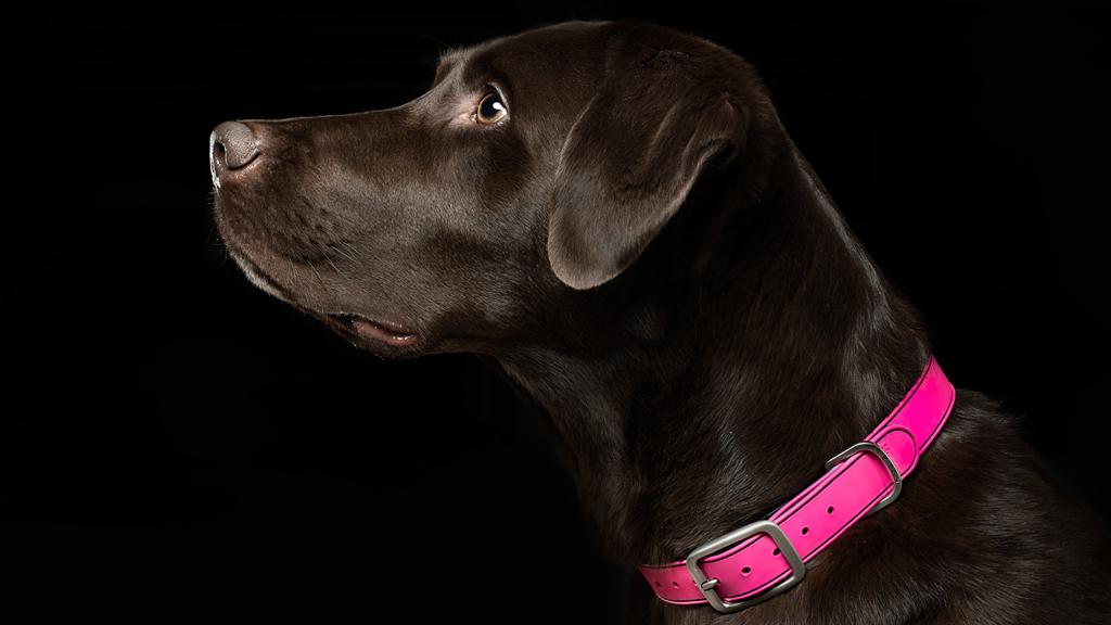 Henry Dog Collar